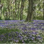 Howard MorganBluebell Wood IVwatercolour on paper22 x 15 inches
